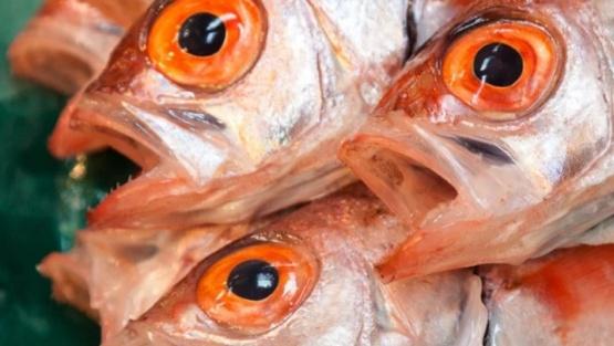El cambio climático está generando peces más pequeños