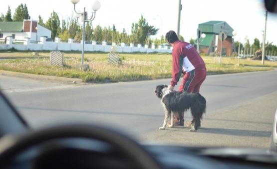 Héroe anónimo: detuvo el tránsito para ayudar a un perro