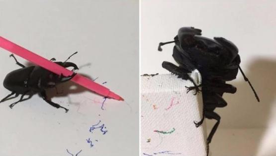 Un escarabajo aprendió a dibujar y su dueña vende las adorables pinturas en internet