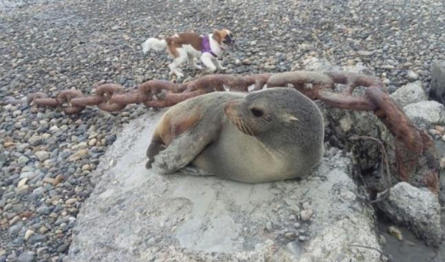Es normal ver diferentes especies en la costanera.