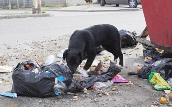 El Calafate también tendrá Audiencia pública por la superpoblación canina