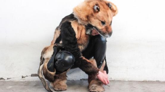 Polémica por una diseñadora mexicana crea ropa con piel de perro