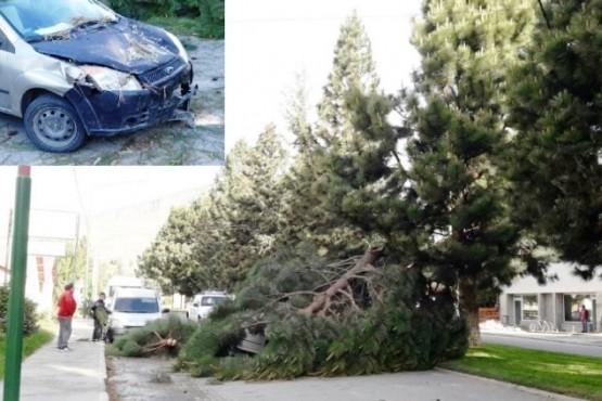 Un árbol cayó sobre el auto en pleno centro