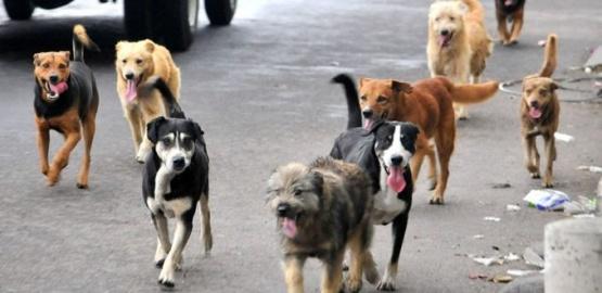 Buscan regular la tenencia responsable de mascotas y animales de compañía