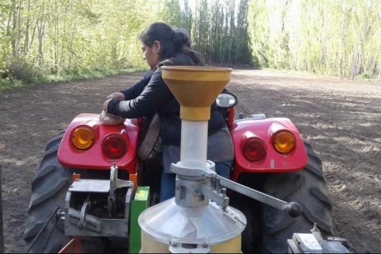 Evalúan la producción de Alfalfa y Cereales
