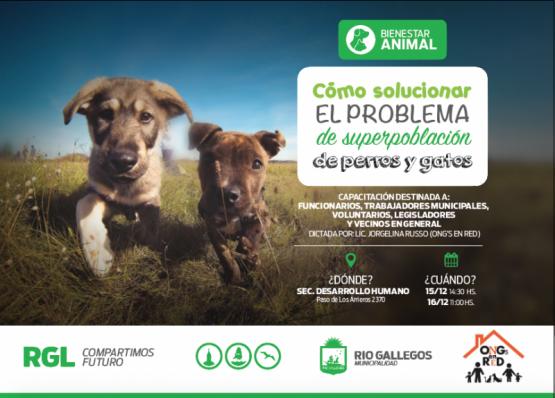 Alternativa de solución para la superpoblación animal