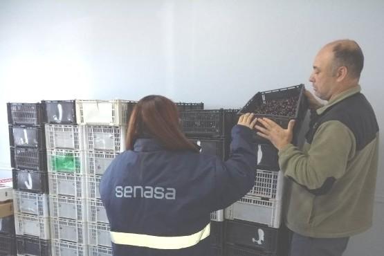 Decomisaron más de 500 kilos de cerezas en Río Gallegos