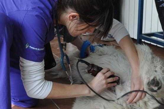 Ante los envenenamientos de perros piden que denuncien los casos en la justicia