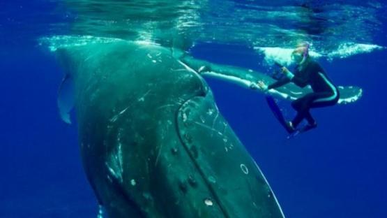 Increible reacción de una ballena que salvó a una mujer del ataque de un tiburón