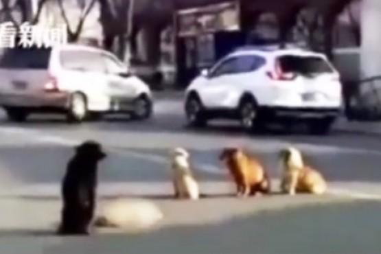 Perros callejeros hacen guardia para cuidar el cadáver de su amigo