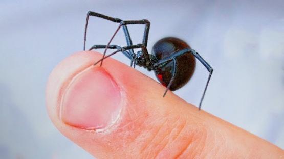 No se registraron casos de picaduras de araña en Santa Cruz