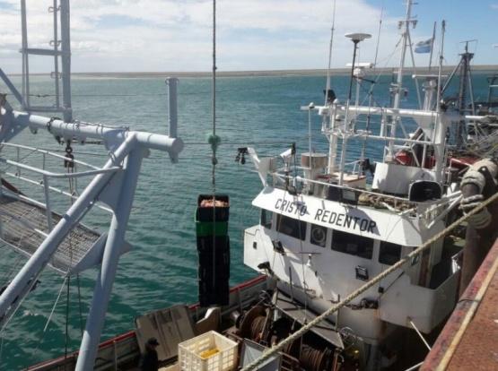 Comenzaron las descargas de Centolla en Puerto San Julián