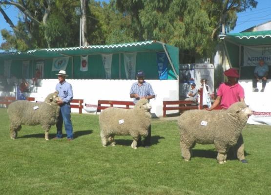 Controlaron el ingreso de los animales en las exposiciones rurales en Comodoro y Deseado