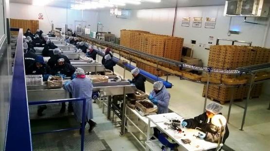 Creció la exportación de cereza de la Patagonia a EE.UU. y Canadá