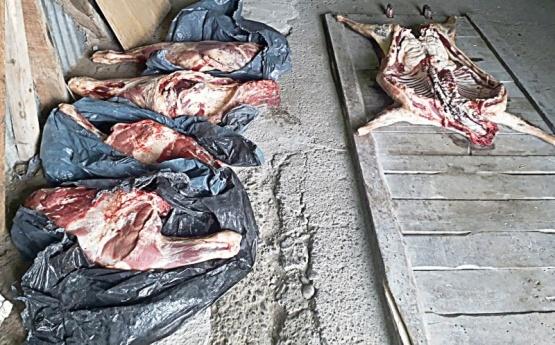 GEOR decomisó animales faenados transportados en camionetas