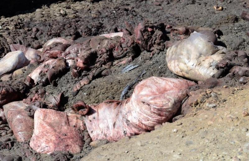 La carne tirada en la fosa.