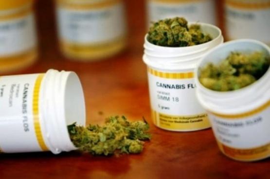 Paraguay reabre el debate sobre el cannabis medicinal
