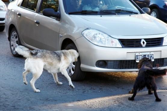 Mejora la expectativa en los vecinos por el tratamiento de la problemática canina