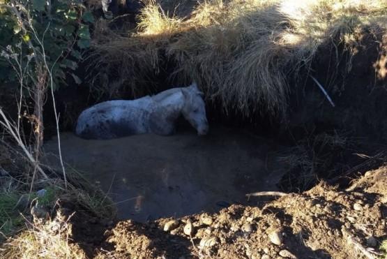 Rescataron a un caballo que cayó a un pozo