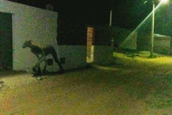 Pánico por extraña criatura que asesinó a dos perros en Santa Fe Foto:Captura