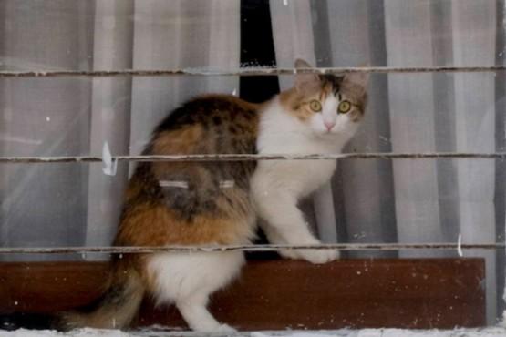Usaban gatos para entrar celulares y cargadores a la cárcel