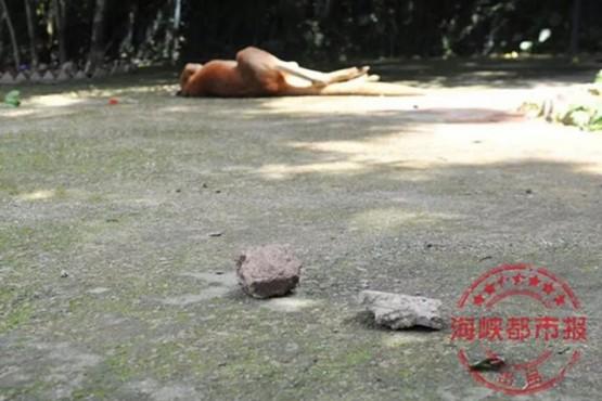Visitantes de un zoo mataron a una canguro a pedradas