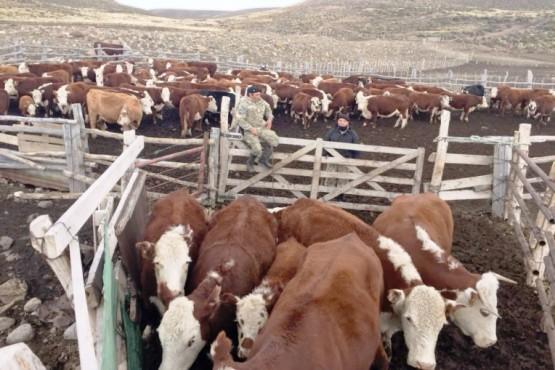 Esclarecen robo de ganado en cercanías a Gobernador Gregores