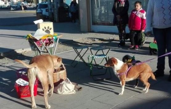 Los canes desfilaron en la ciudad del Gorosito.