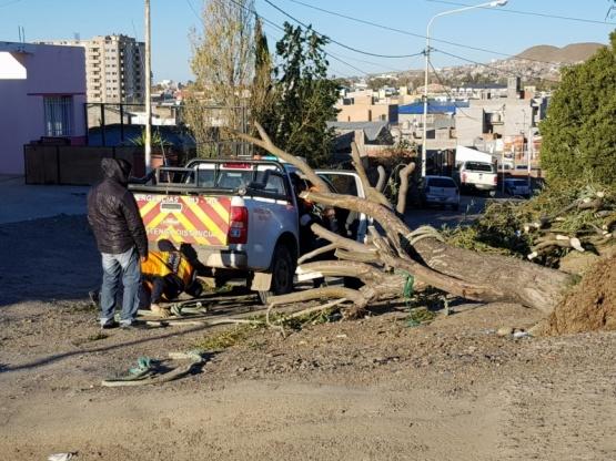 En Caleta Olivia el viento tiró un árbol.