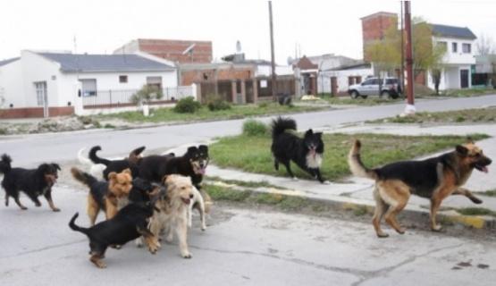 En números, la situación de los perros en Río Gallegos