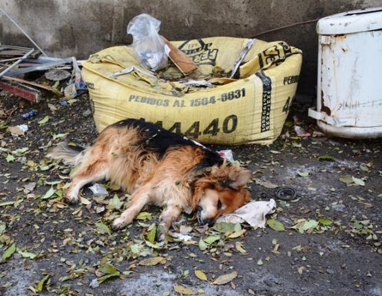 Aumentan los perros intoxicados por herbicidas
