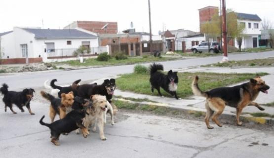 Qué dice la ordenanza para controlar los perros de la calle