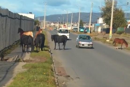 Los caballos retirados desde la vía pública podrían ser subastados