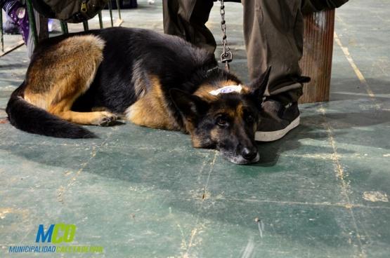 Castraron más de cien perros en Caleta Olivia
