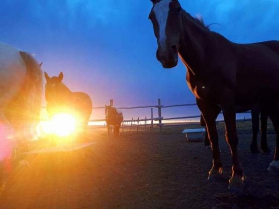 Estos son algunos de los caballos de Daniel.