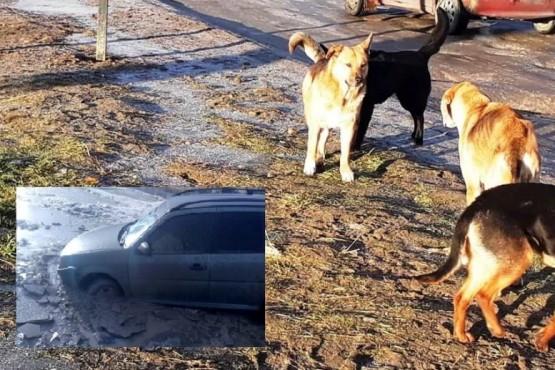 Pozos y perros: el relato y llanto de una mujer al caminar el San Benito