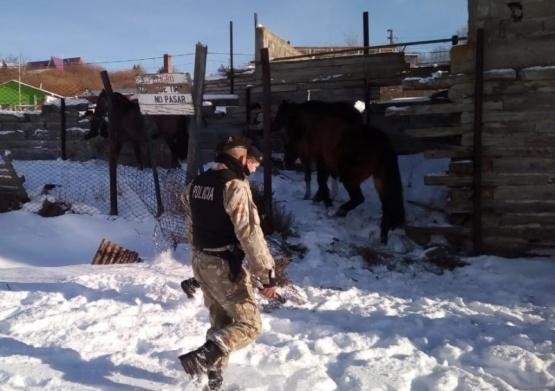 Recuperaron caballos robados en cercanías de Gobernador Gregores