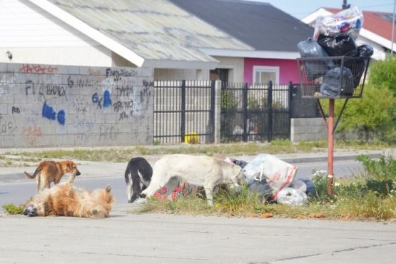 Desde Bienestar Animal Municipal se contradicen en declaraciones y medidas
