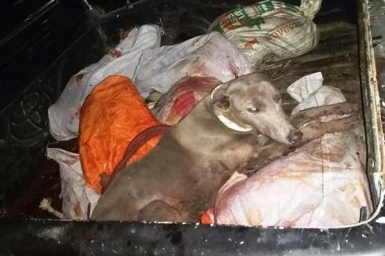Policía Rural secuestra armas de fuego y animales silvestres muertos