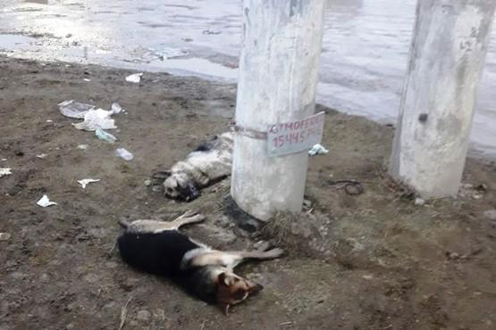 Preocupación por envenenamiento de perros en el San Benito y Bicentenario