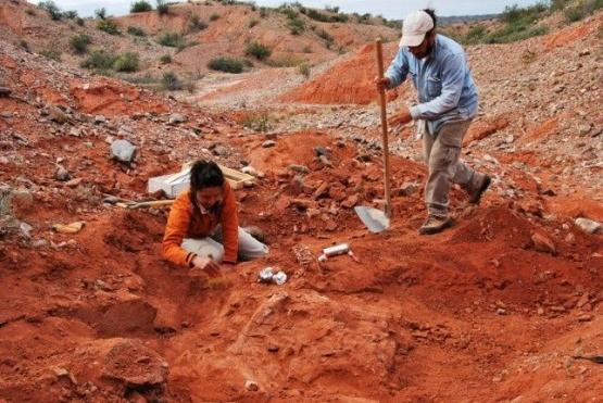 Descubren en San Juan el primer dinosaurio gigante