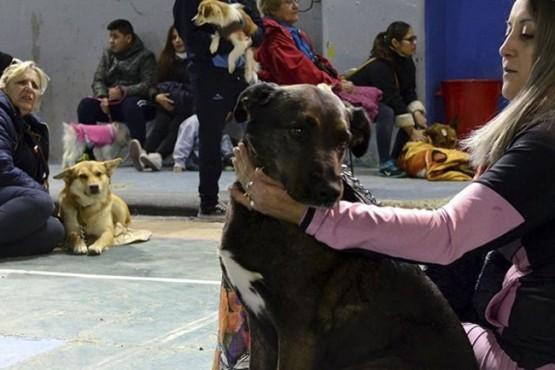 Segunda castración masiva de mascotas