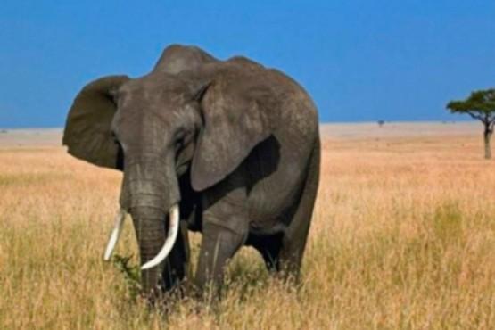 Venganza animal: un elefante mató a un chico que le tiraba piedras