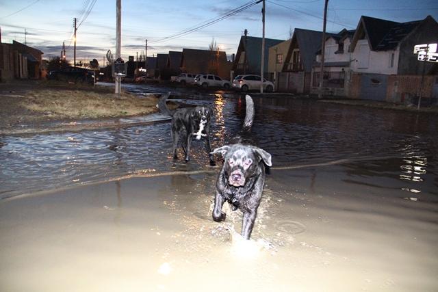 Perros sobre las aguas servidas. (C.G)