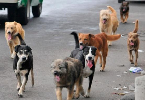 En la Cuenca también buscan solucionar el problema de los perros