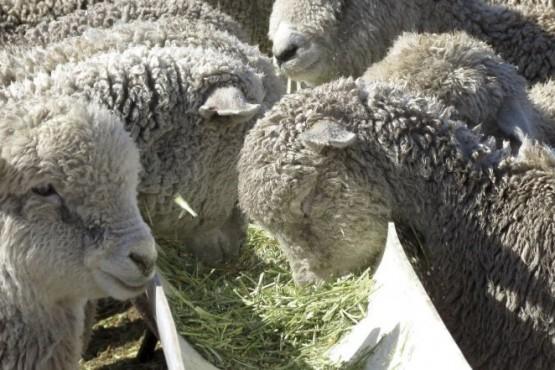 Jornadas de ganadería ovina