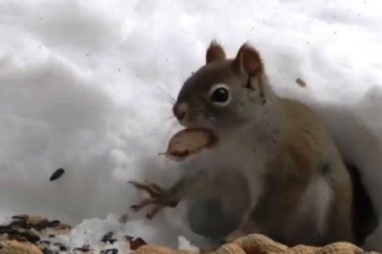 Invasión de ardillas en el conurbano bonaerense