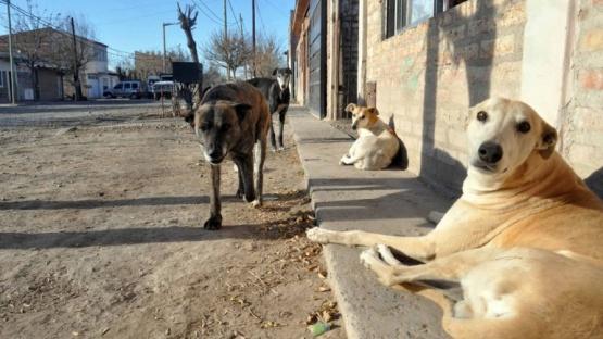 En la cuenca también preocupa la cantidad de perros.