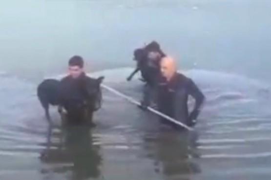 Bomberos rescataron dos perros en una laguna