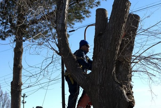 Tuvieron que podar árboles por problemas con el cableado